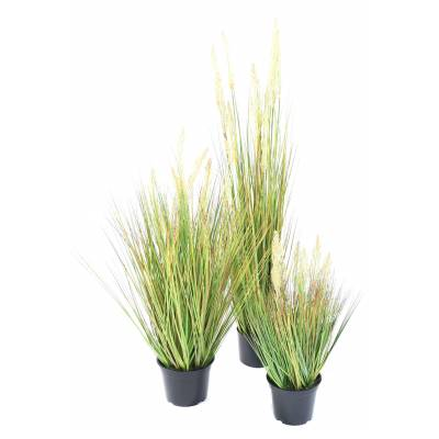 ONION Artificial GRASS SEED