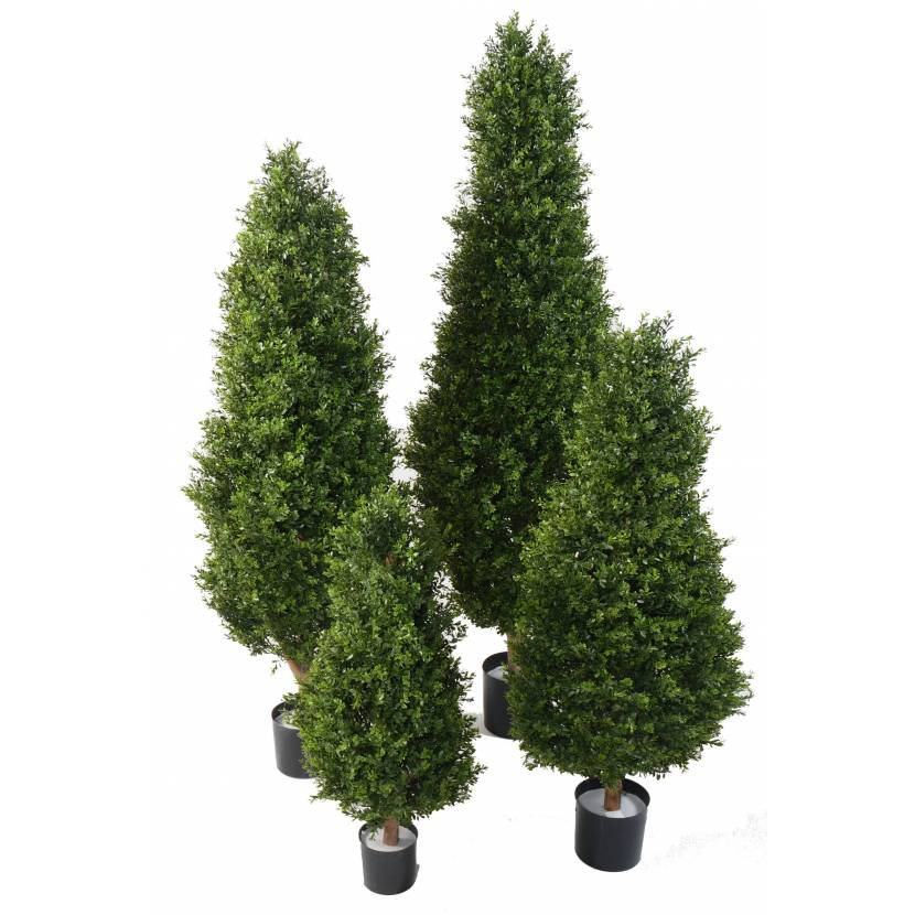 BOXWOOD RED DAY TOPIARY 95 UV