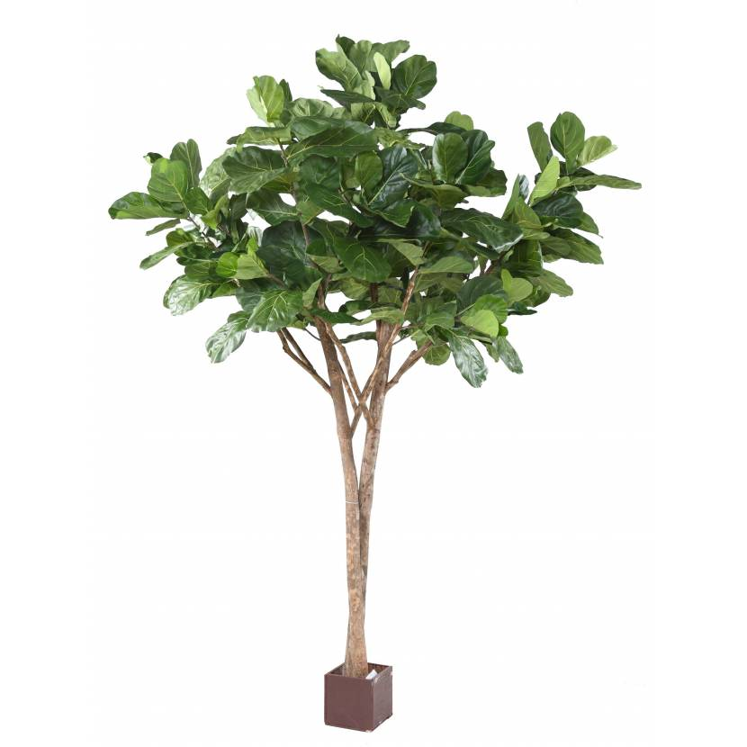 LYRATA MULTI TREE 3M