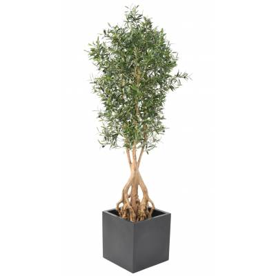 OLIVE TREE Artificial ROOT