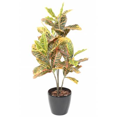 CROTON 100 Artificial