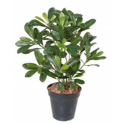 PITTOSPORUM Artificial PLANT 38