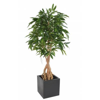 FICUS Artificiel ROOT LONGIFOLIA 180 BASE