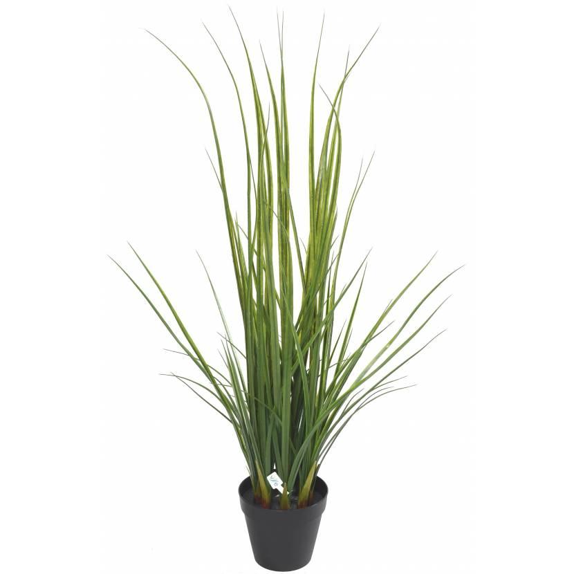 LEMON GRASS 120