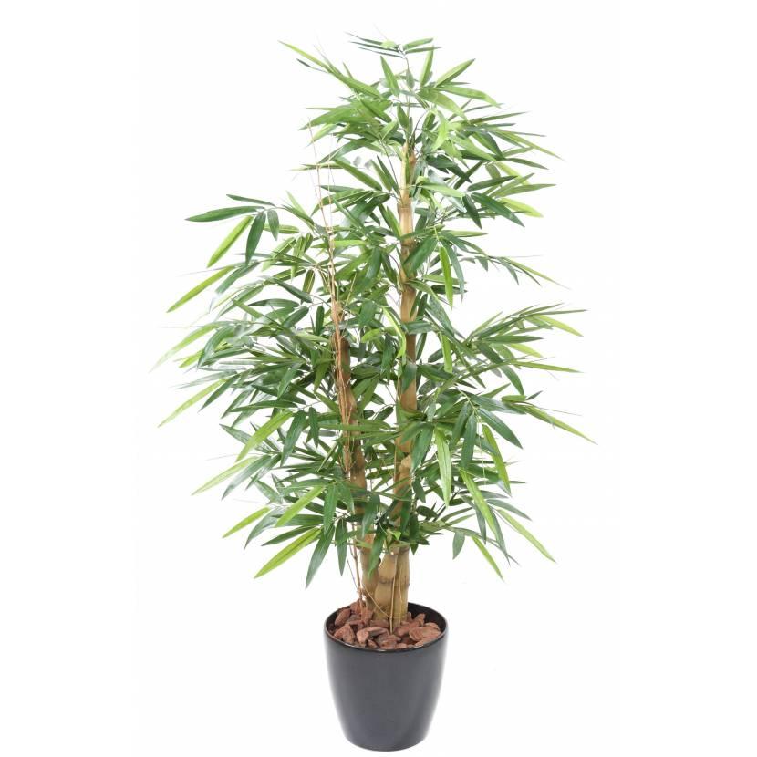 BAMBOO BUDDHA TREE