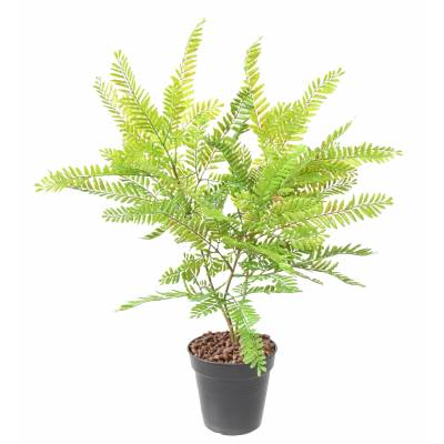 CASSIA Artificial PIQUET L