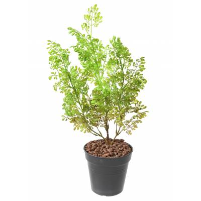 BUXUS Artificiel PIQUET