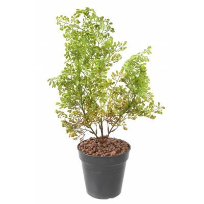 BUXUS Artificial PICKET