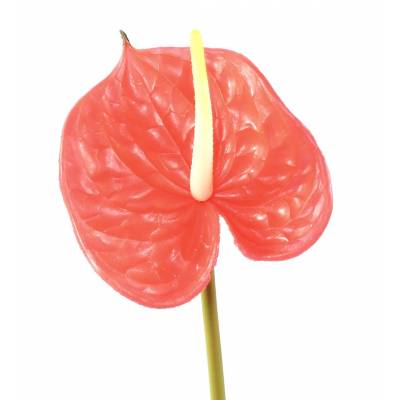 ANTHURIUM Artificial SPRAY 58