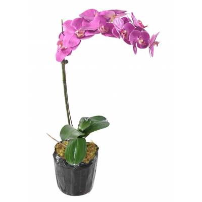 PHALAENOPSIS Artificial MOUND 55