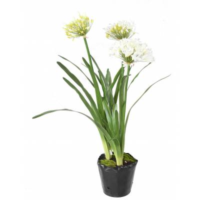 African lily Artificial MOTTE