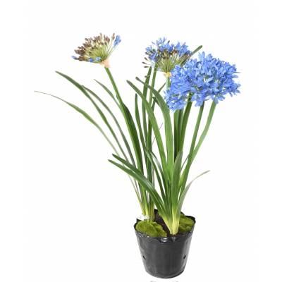 African lily Artificial Mound