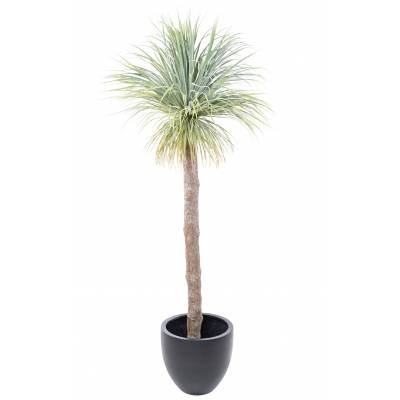 AGAVE Artificial GEANT 220