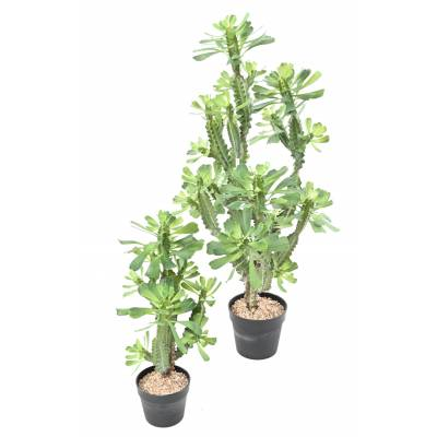 SPURGE, Artificial LACTEE 110