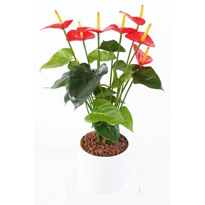 ANTHURIUM Artificiel EN CAPI BLANC