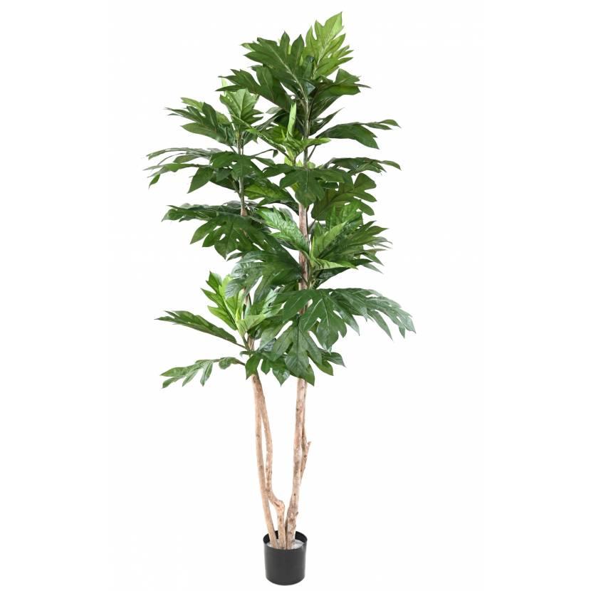 ARTROCARPUS Artificial ALTILIS Multi trunks (breadfruit tree)