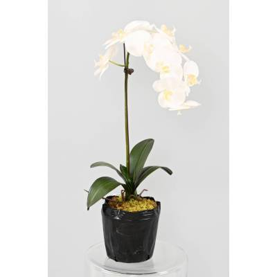 PHALAENOPSIS Artificial MOUND 85