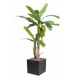 BANANIER TREE AVEC FRUITS Artificiel EN CUBE FIBER