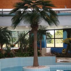 Palm trees, banana & tropics