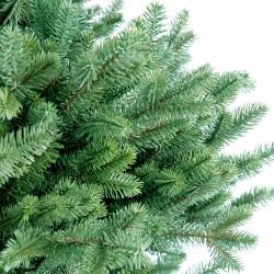 Pine and Fir
