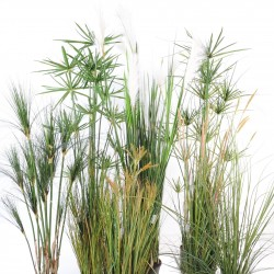 Grasses & papyrus