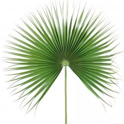 Palmes phœnix palmiers artificielles