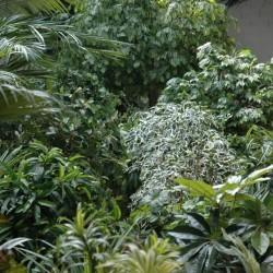 Arbres & Arbustes artificiels